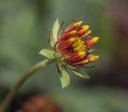 Neugeborene Blume Lizenzfreies Stockfoto