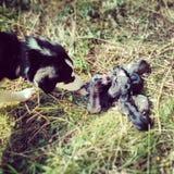 Neugeborene Hunde Stockfotografie