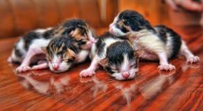 Neugeborene Kätzchen Stockfoto