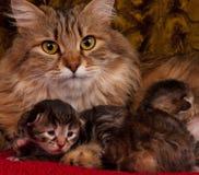 Neugeborene Kätzchen Stockbild