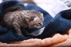 Neugeborene Kätzchen, erster Tag des Lebens Stockfotos