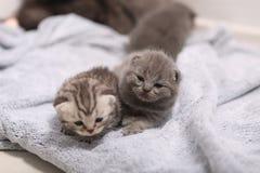 Neugeborene Kätzchen, erster Tag des Lebens Lizenzfreie Stockfotos