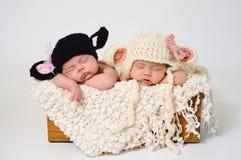 Neugeborene Mädchen, die schwarze Schaf-und Lamm-Hüte tragen Stockbild
