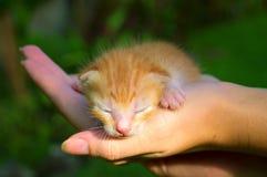 Neugeborene Miezekatze in der Hand unter Sonnenlicht Stockfotografie