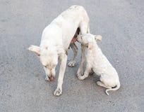 Neugeborener Hund, der von der Brust einzieht Lizenzfreies Stockfoto