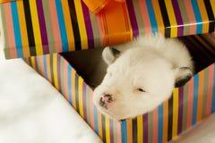 Neugeborener Welpenschlaf Stockbilder