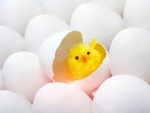 Neugeborenes Huhn im Oberteil des Eies als Symbol von 2017 entsprechend Ostkalender Lizenzfreies Stockbild