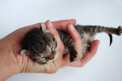Neugeborenes Kätzchen Stockfotografie