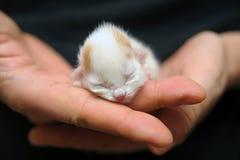 Neugeborenes Kätzchen lizenzfreie stockfotos