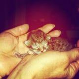 Neugeborenes Kätzchen in den Frauenhänden Stockfotografie