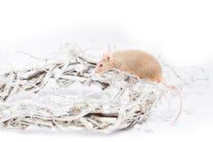 Neugierige beige Maus, die in einem Kranz von Zweigen sitzt Lizenzfreies Stockfoto