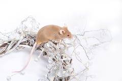 Neugierige beige Maus, die in einem Kranz von Zweigen sitzt Lizenzfreie Stockfotografie