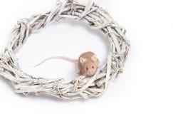Neugierige beige Maus sitzt in einem Kranz von Zweigen Lizenzfreie Stockfotografie