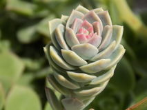Neugierige Blume stockbilder