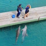 Neugierige Delphine und zwei Frauen Stockbilder
