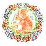 Neugierige Eichhörnchen-Aquarell-Illustration handgemalt auf weißem Hintergrund Stockbild