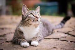 Neugierige graue Katze Stockfotos