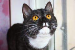 Neugierige Katze Lizenzfreie Stockfotos