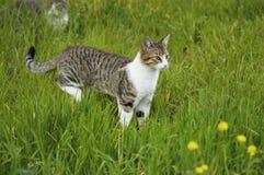 Neugierige Katze Stockbilder
