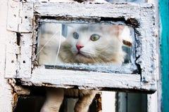 Neugierige Katze Stockfotos