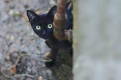 Neugierige Katze, die im Hinterhof schleicht Stockfotografie