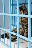 Neugierige Katze hinter Stäben auf Windowsill Stockbilder