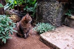 Neugierige Katze im tropischen Garten Stockfotos