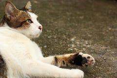 Neugierige Katze schauen oben zu den Vögeln Lizenzfreie Stockfotografie