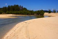Neugierige mamoko Madagaskar-Lagune Lizenzfreie Stockbilder