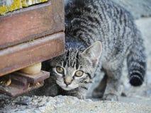 Neugierige nette lustige Katze Stockbild