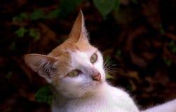 Neugierige schauende Katze Stockbild
