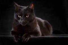 Neugierige schwarze Katze, die nachts sitzt und wartet Stockfotos
