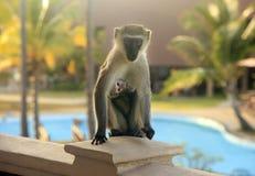 Neugieriger Affe auf dem Balkon des Hotels Lizenzfreie Stockfotos