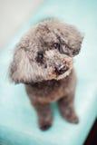 Neugieriger Hund Stockfotografie