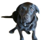 Neugieriger Hund Lizenzfreie Stockfotos