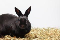 Neugieriger Kaninchenhintergrund Lizenzfreies Stockfoto