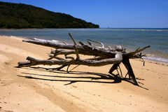 Neugieriger mamoko Strand Lizenzfreie Stockbilder