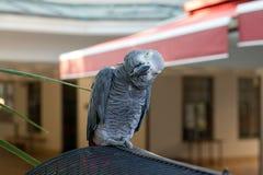 Neugieriger Papagei Lizenzfreie Stockfotos
