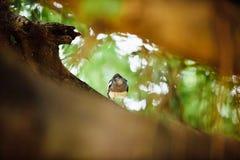 Neugieriger schöner tropischer Vogel auf einer Niederlassung des Baums, i schauend Lizenzfreie Stockbilder