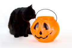 Neugieriger schwarzer Kätzchen-und Süßigkeit-Kürbis Stockbilder