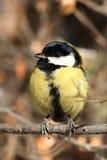 Neugieriger Vogel Lizenzfreie Stockfotos