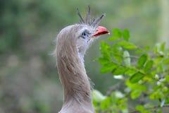 Neugieriger Vogel passt über die Büsche auf Stockbild