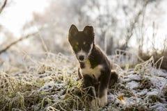 Neugieriger Welpe setzt auf dem gefrorenen Gras Lizenzfreies Stockbild