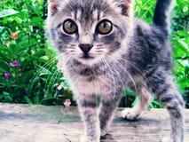 Neugieriges Kätzchen Stockfoto