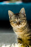Neugieriges Kätzchen