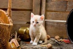 Neugieriges Kätzchen Stockbild