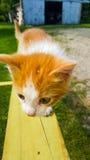 Neugieriges Kätzchen Stockbilder