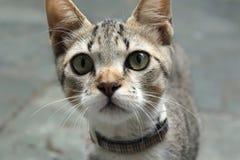 Neugieriges Kätzchen lizenzfreies stockbild