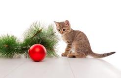 Neugieriges Kätzchen, das mit Ball des neuen Jahres spielt stockbilder