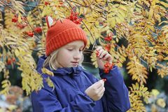 Neugieriges Kindermädchen sammelt Ebereschenbeeren von der Niederlassung Kind wird in einem lustigen gestrickten warmen Hut mit d Stockfoto